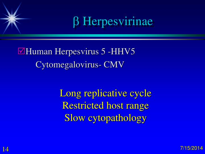 Herpesvirinae