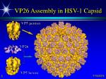 vp26 assembly in hsv 1 capsid