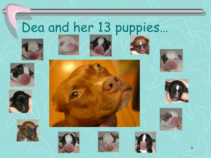 Dea and her 13 puppies…