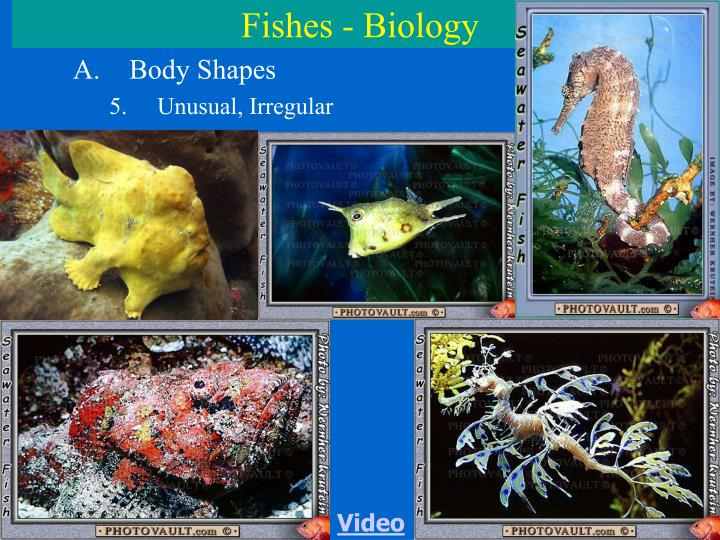 Fishes - Biology