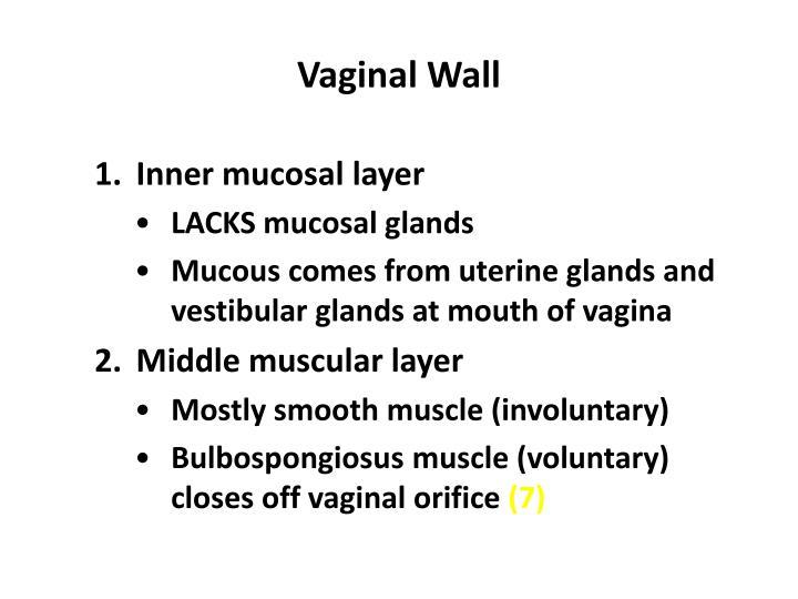 Vaginal Wall