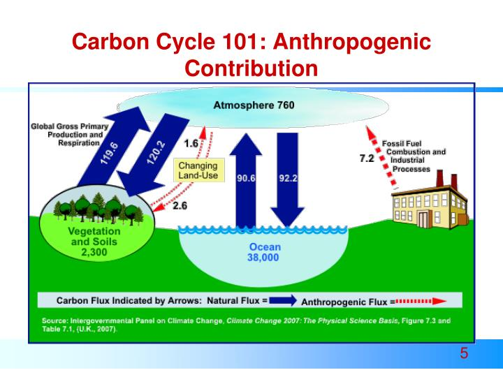 Carbon Cycle 101: Anthropogenic Contribution