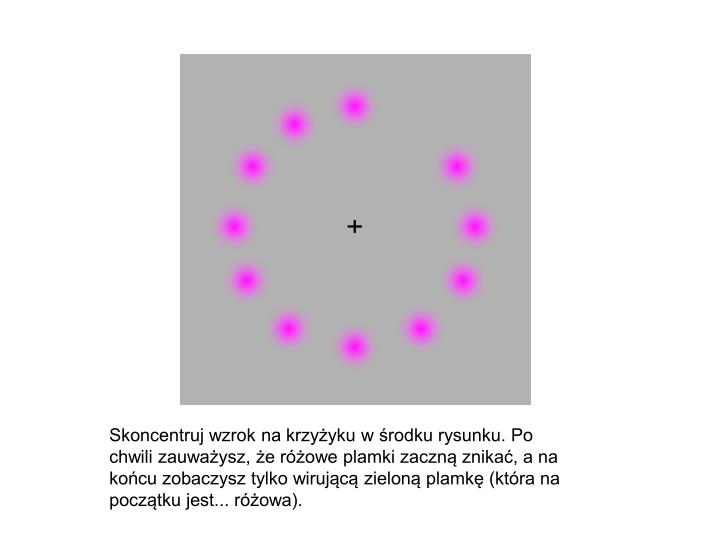 Skoncentruj wzrok na krzyżyku w środku rysunku. Po chwili zauważysz, że różowe plamki zaczną znikać, a na końcu zobaczysz tylko wirującą zieloną plamkę (która na początku jest... różowa).
