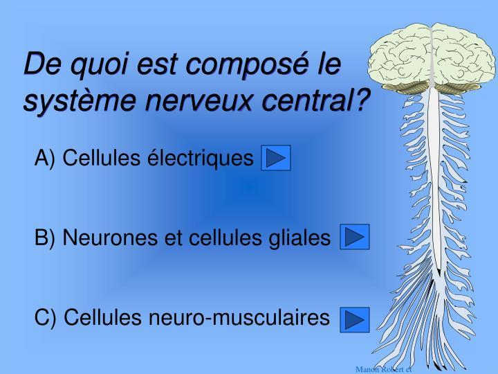 De quoi est composé le système nerveux central?