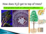 how does h 2 o get to top of trees