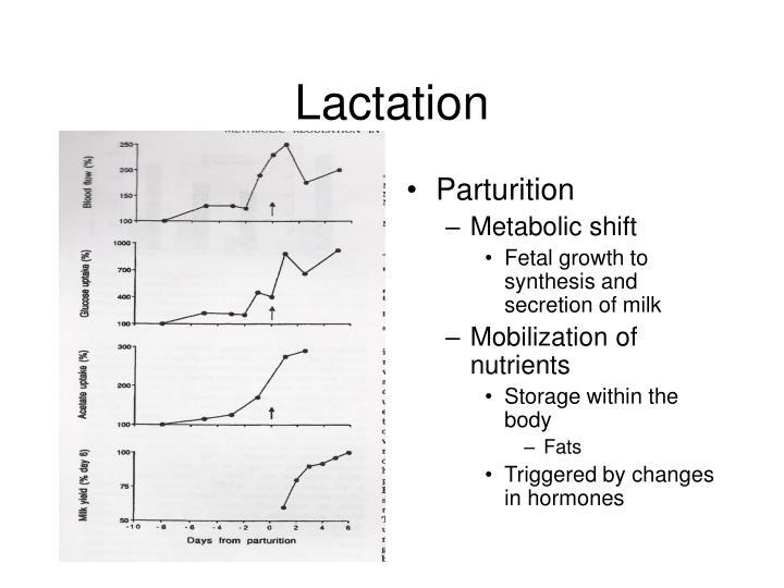 Lactation