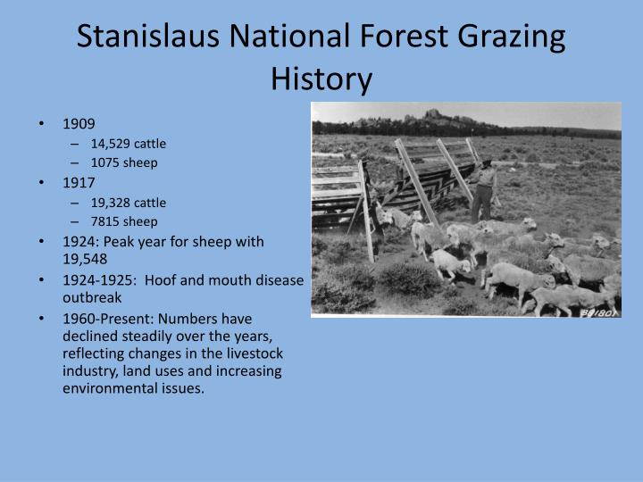 Stanislaus National Forest Grazing History