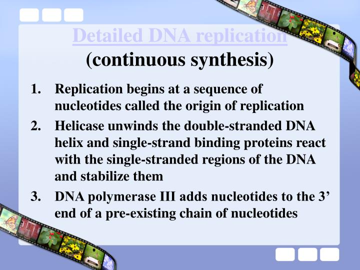 Detailed DNA replication