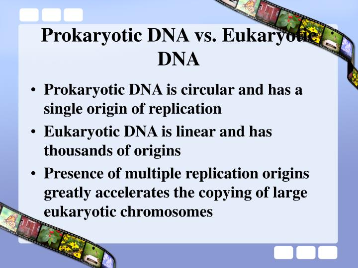 Prokaryotic DNA vs. Eukaryotic DNA