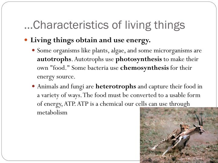 …Characteristics of living things
