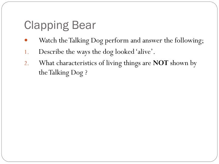 Clapping Bear