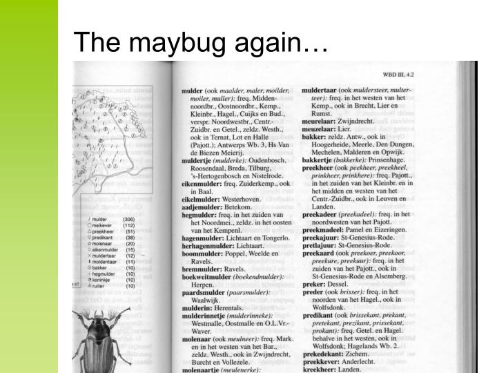 The maybug again…
