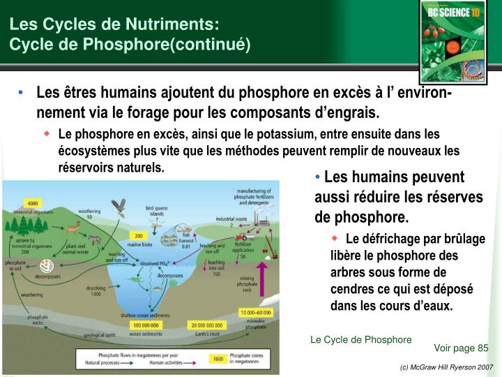 Les Cycles de Nutriments: