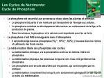les cycles de nutriments cycle de phosphore