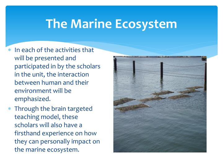 how humans impact marine ecosystems Human influences on aquatic ecosystems human activities affecting aquatic ecosystems are more likely to disrupt natural patterns and processes because species do not have the ability to adapt to the rapid changes to their environment that can occur.