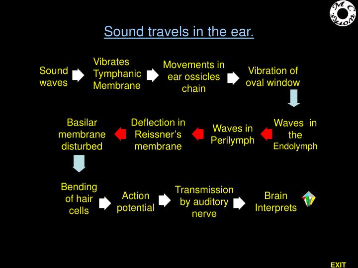 Sound travels in the ear.