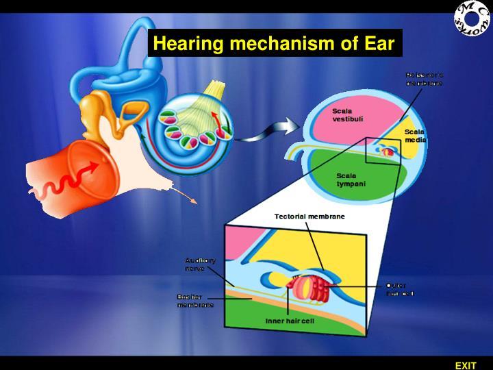 Hearing mechanism of Ear