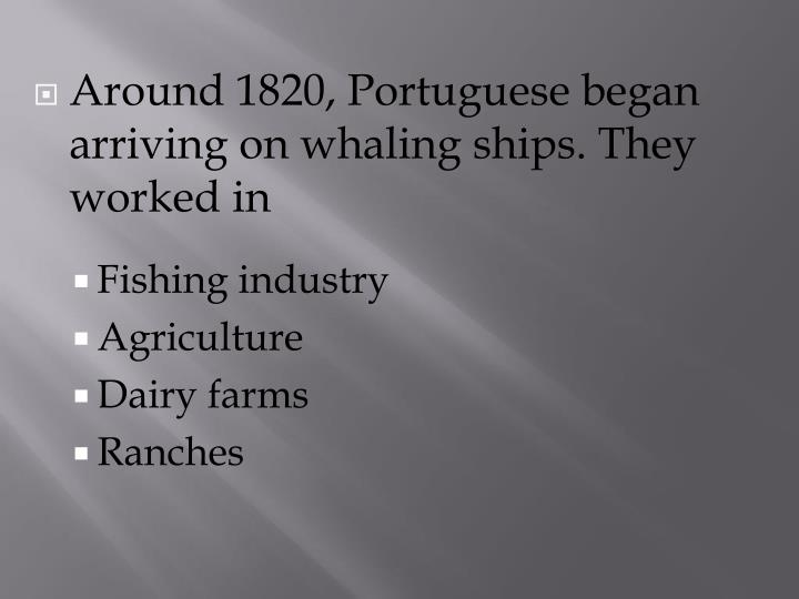 Around 1820, Portuguese began arriving on whaling ships. They worked in