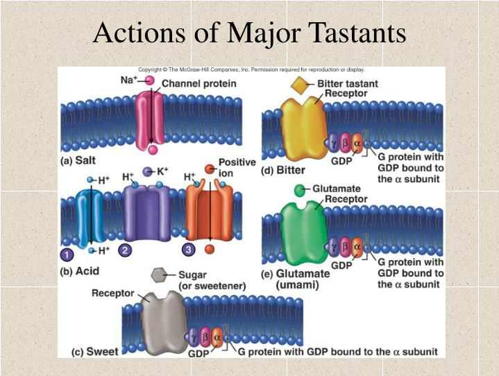 Actions of Major Tastants