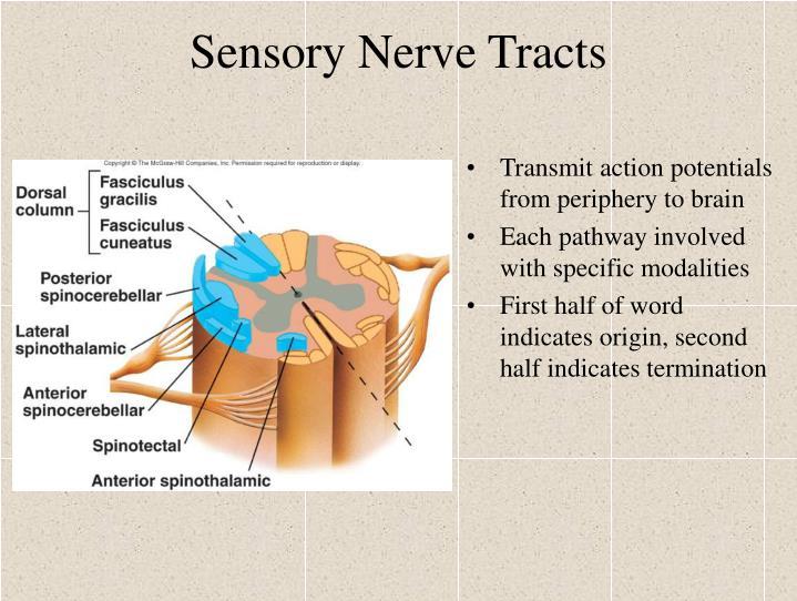 Sensory Nerve Tracts
