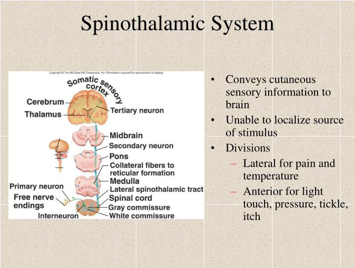 Spinothalamic System