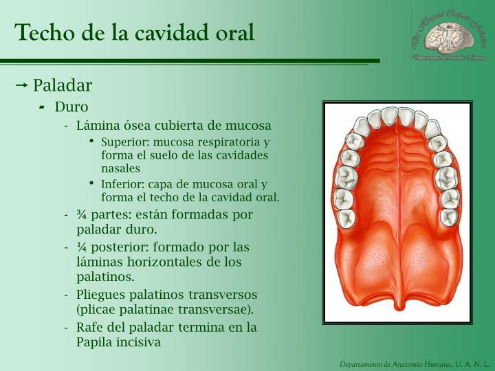 Techo de la cavidad oral