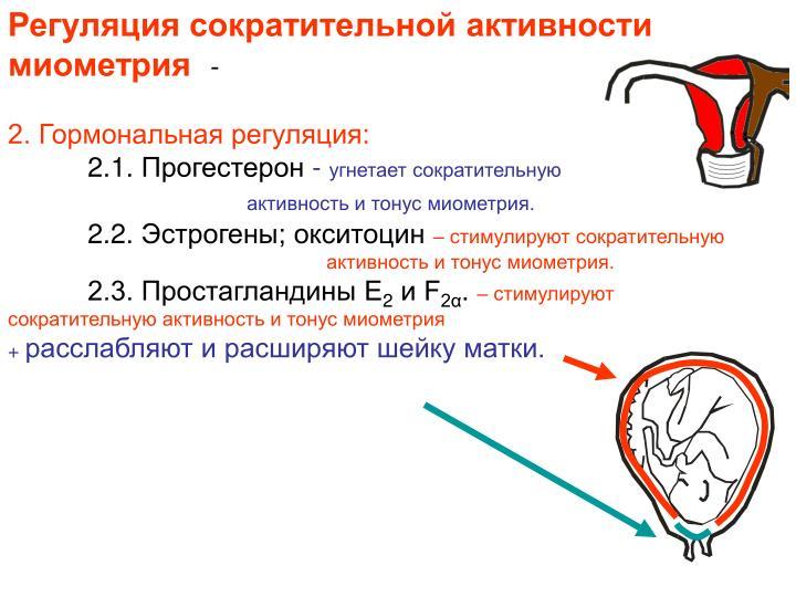 Регуляция сократительной активности