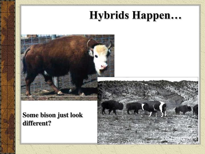 Hybrids Happen…