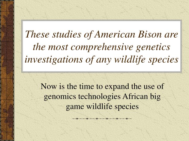 These studies of American Bison are the most comprehensive genetics investigations of any wildlife species