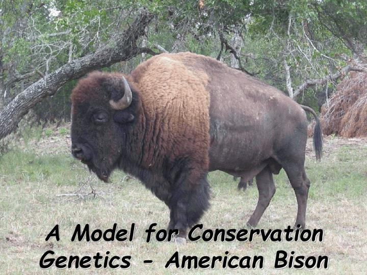 A Model for Conservation Genetics - American Bison