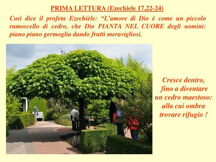 PRIMA LETTURA (Ezechiele 17,22-24)
