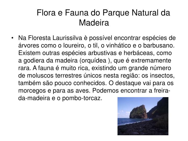 Flora e Fauna do Parque Natural da Madeira