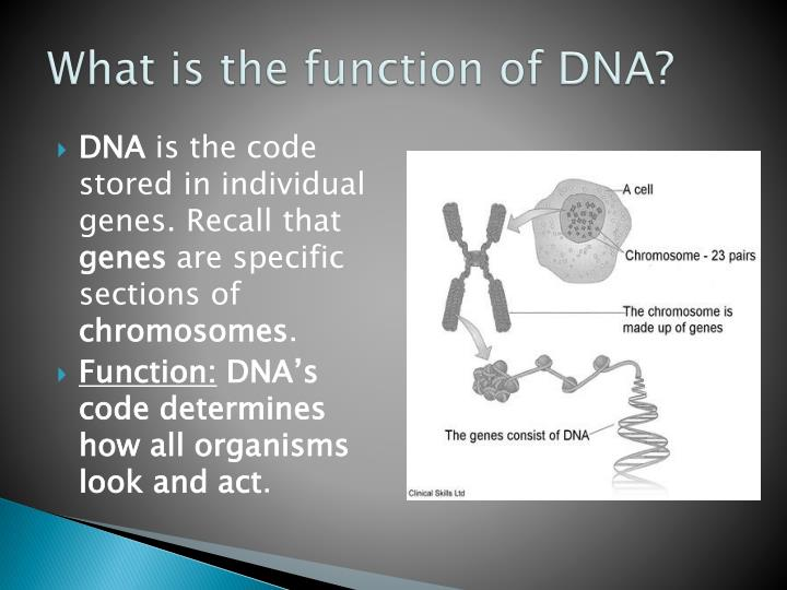 Orica greenedge team presentation slide