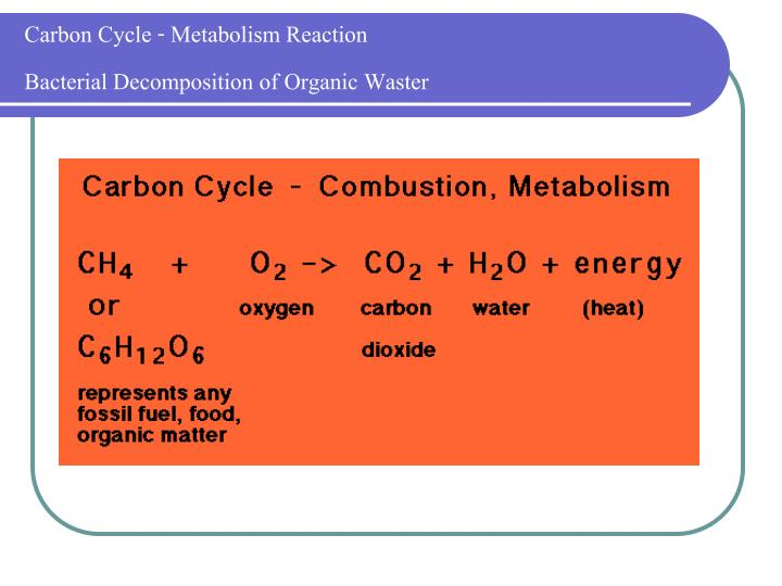 Carbon Cycle - Metabolism Reaction