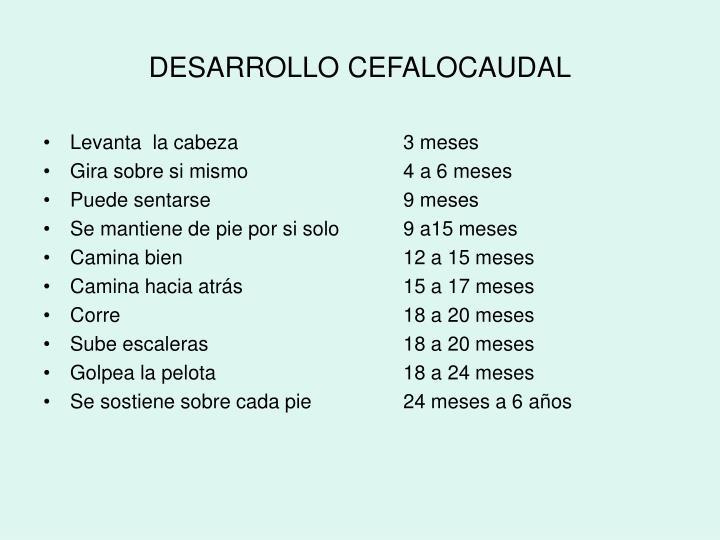 DESARROLLO CEFALOCAUDAL