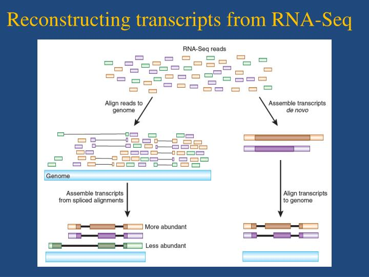 Reconstructing transcripts from RNA-Seq