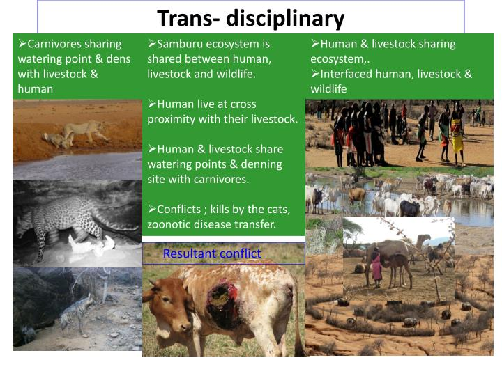 Trans- disciplinary