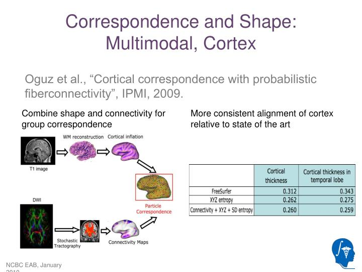 Correspondence and Shape: Multimodal, Cortex