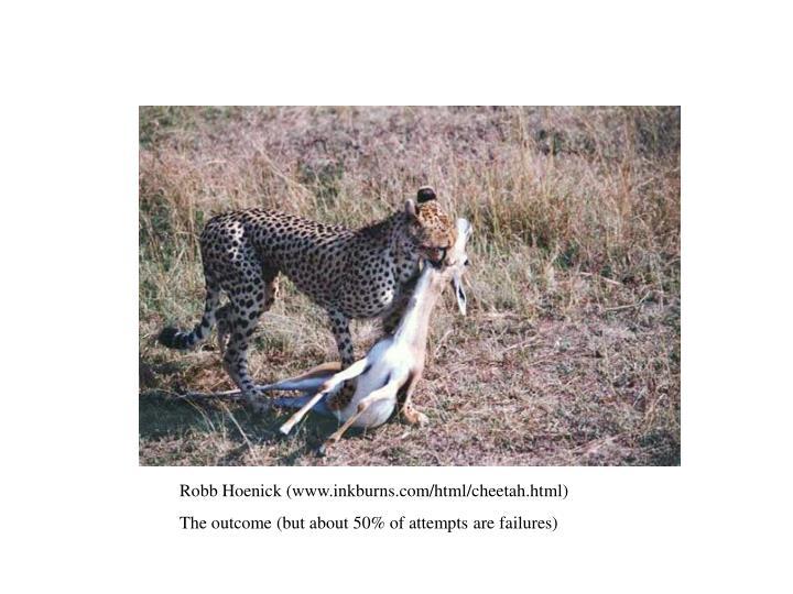 Robb Hoenick (www.inkburns.com/html/cheetah.html)