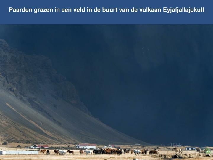 Paarden grazen in een veld in de buurt van de vulkaan Eyjafjallajokull