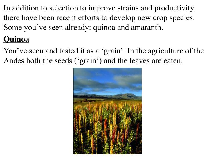 In addition to selection to improve strains and productivity, there have been recent efforts to develop new crop species. Some you've seen already: quinoa and amaranth.