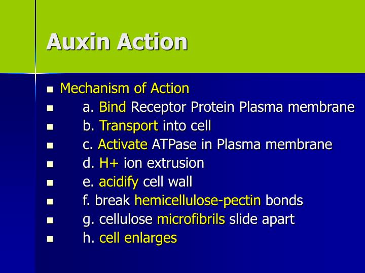 Auxin Action