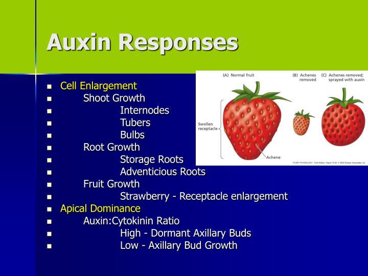 Auxin Responses