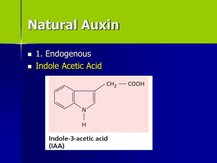 Natural Auxin