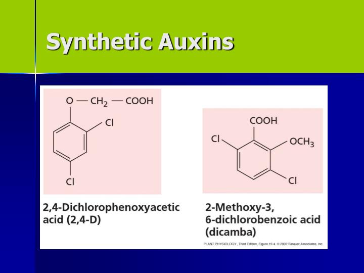 Synthetic Auxins