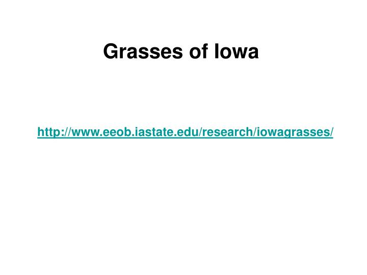 Grasses of Iowa