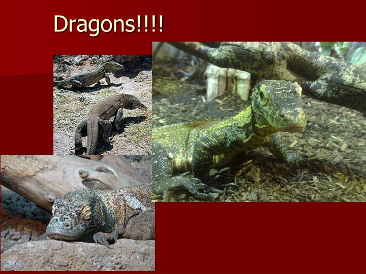 Dragons!!!!