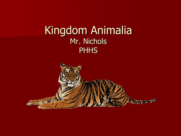 Kingdom animalia mr nichols phhs