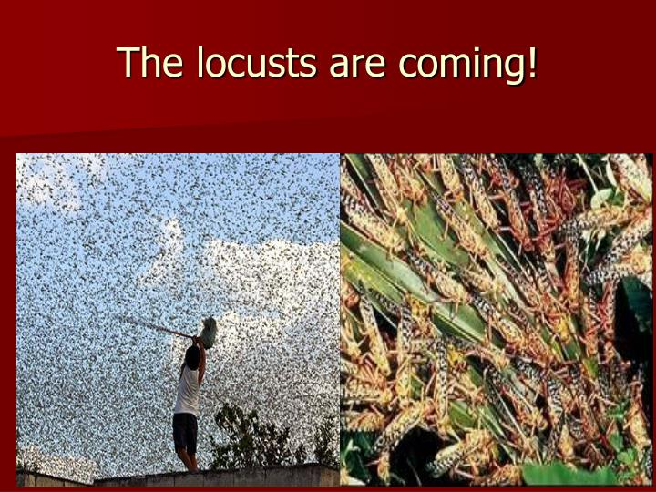 The locusts are coming!