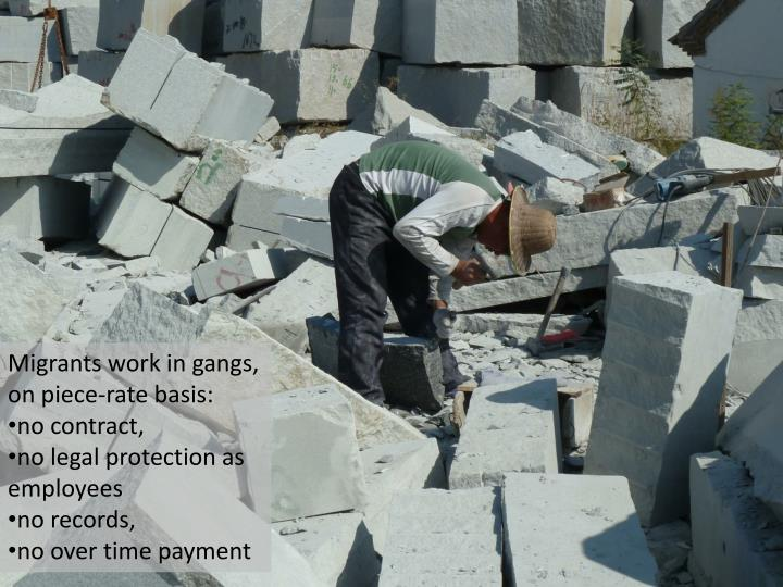 Migrants work in gangs,